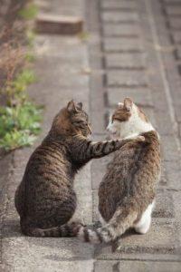 動物の意識 – 猫と犬 (2/2)by 大天使メタトロン