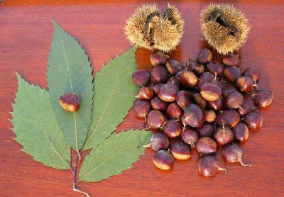 american-chestnuts_custom-810f532d59eeeff4709c3f34f224a010ffcb9691-s1500-c85