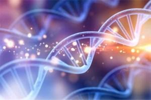 DNAの重要性 by 銀河カウンシル