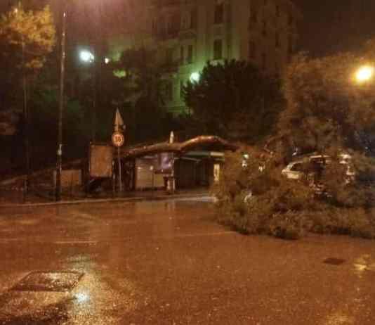 albero crollato Castelletto