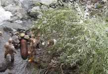 bomba inesplosa campo Ligure