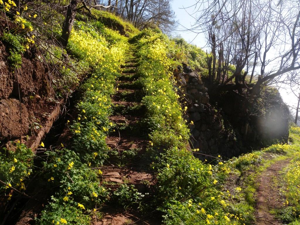 Keltaiset kukat reunustavat portaita.