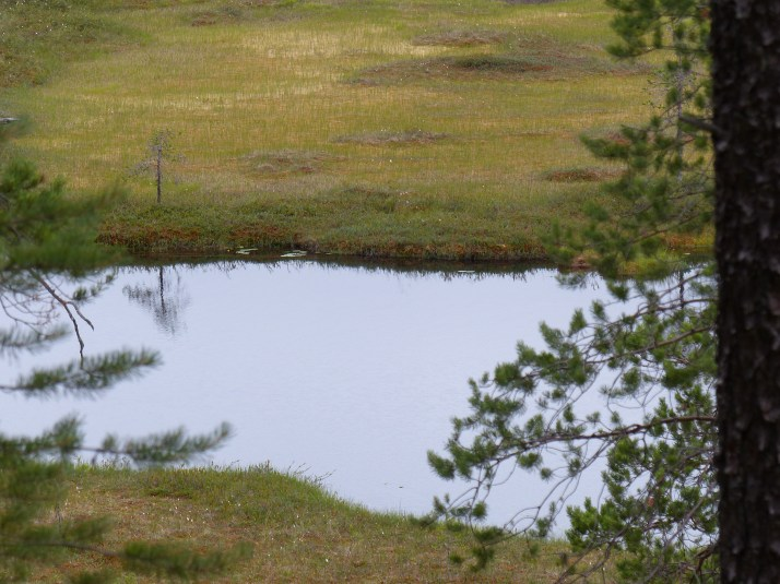 Patvinsuon kansallispuiston suolampi. Kuva kesältä 2013.