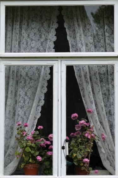 Kukkia ikkunalla (2)