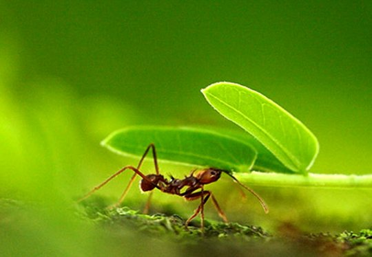 Эффективные народные средства от муравьев в доме. Муравьи в квартире