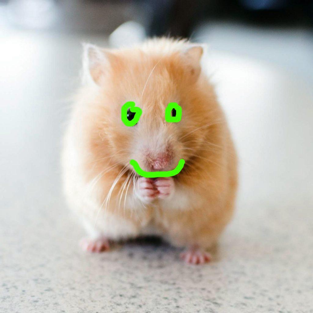 Wie kann man den Lebensdauer-Hamster erhöhen?