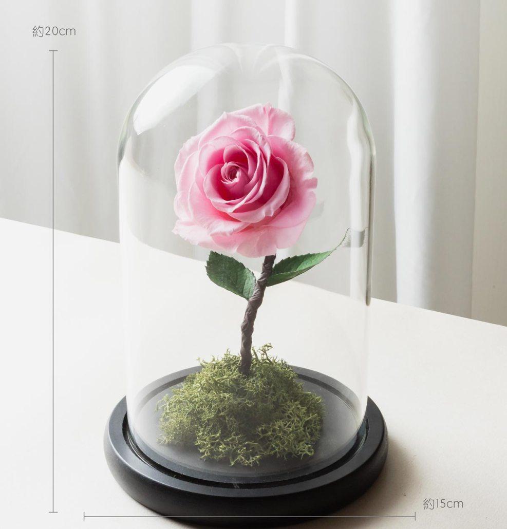 粉色永生玫瑰花尺寸照片,粉色永生玫瑰花玻璃罩