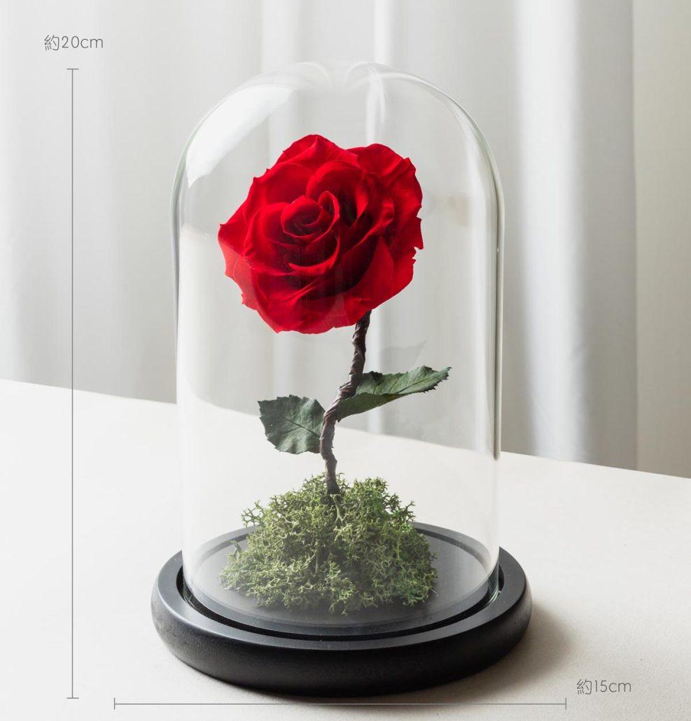 紅色永生玫瑰花尺寸照片,紅色永生玫瑰花玻璃罩
