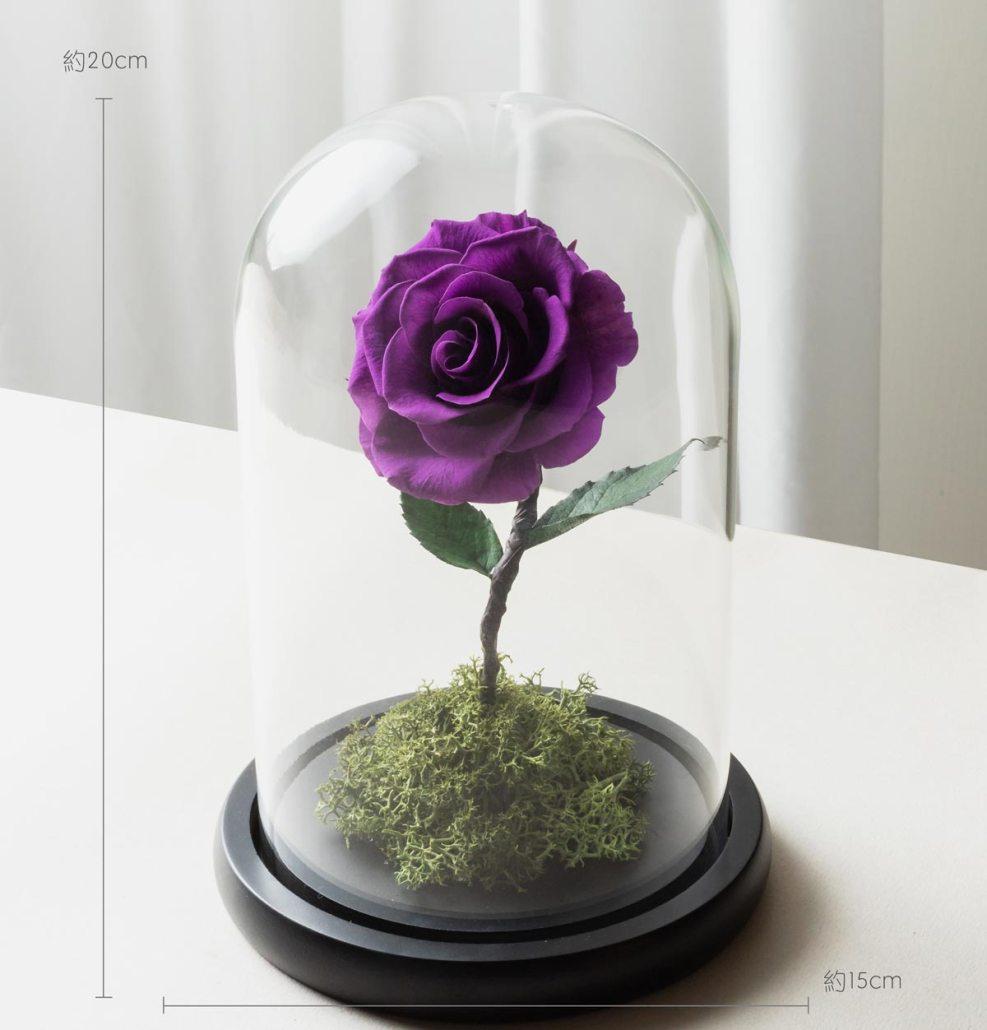 紫黑色永生玫瑰花尺寸照片,紫色永生玫瑰花玻璃罩