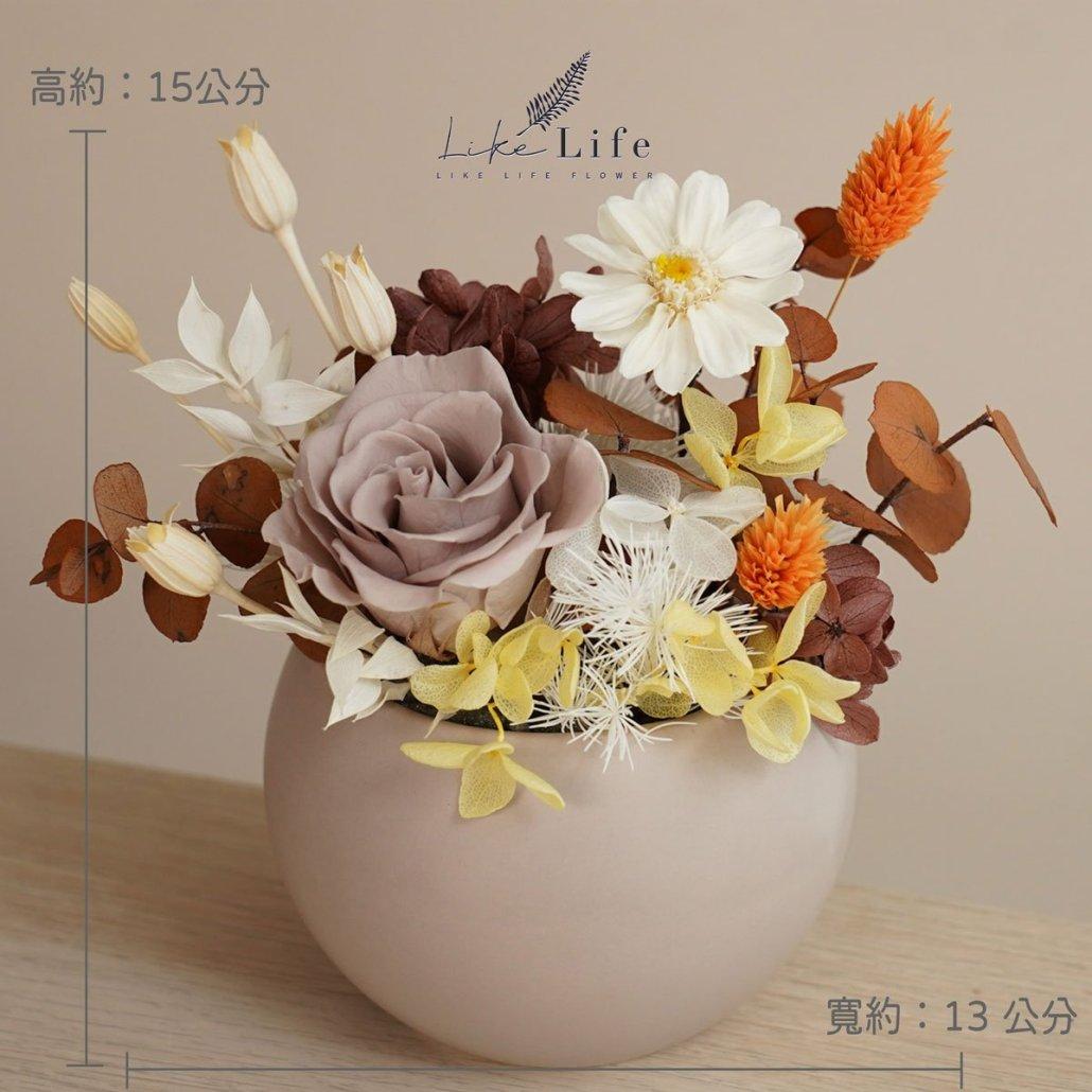 永生花盆栽小型永生花盆栽公分照片奶茶色