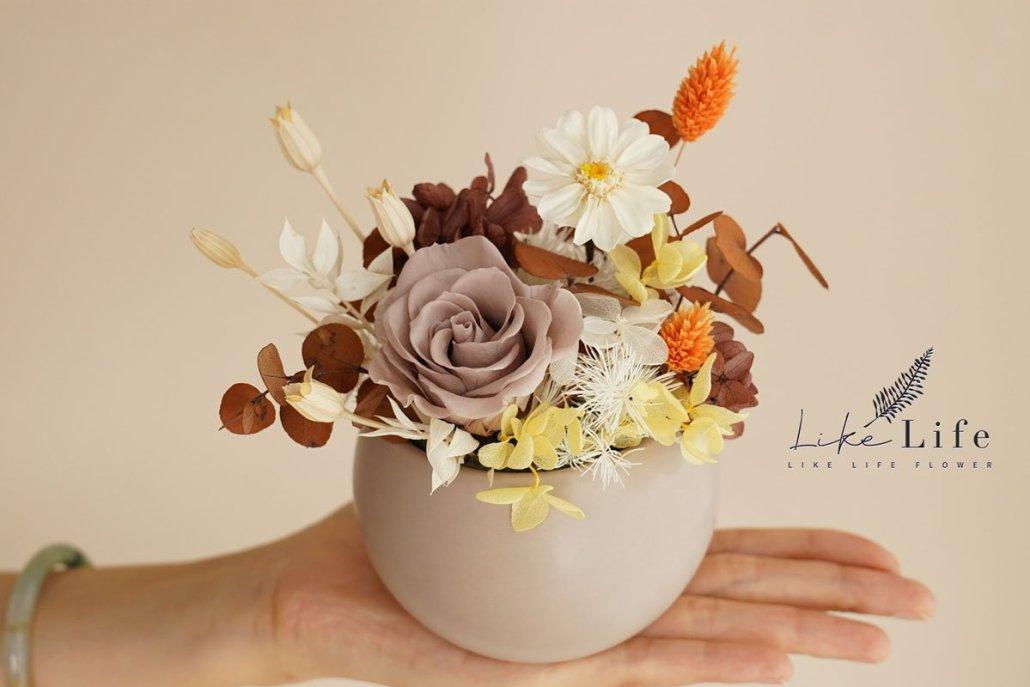 永生花盆栽手拿特寫,奶茶色永生花