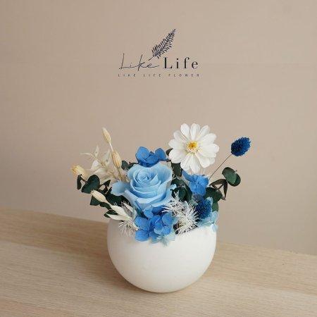 永生花盆栽藍色封面小