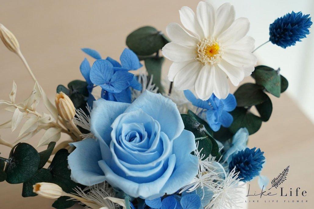特寫藍色永生花盆栽
