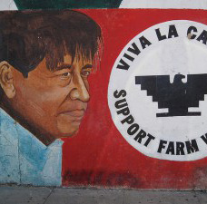 The People Who Don't Go to Law School, Part 3: Growing the Farm Workers' Movement