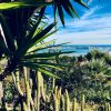 exotic seafront garden with cacti and palm trees