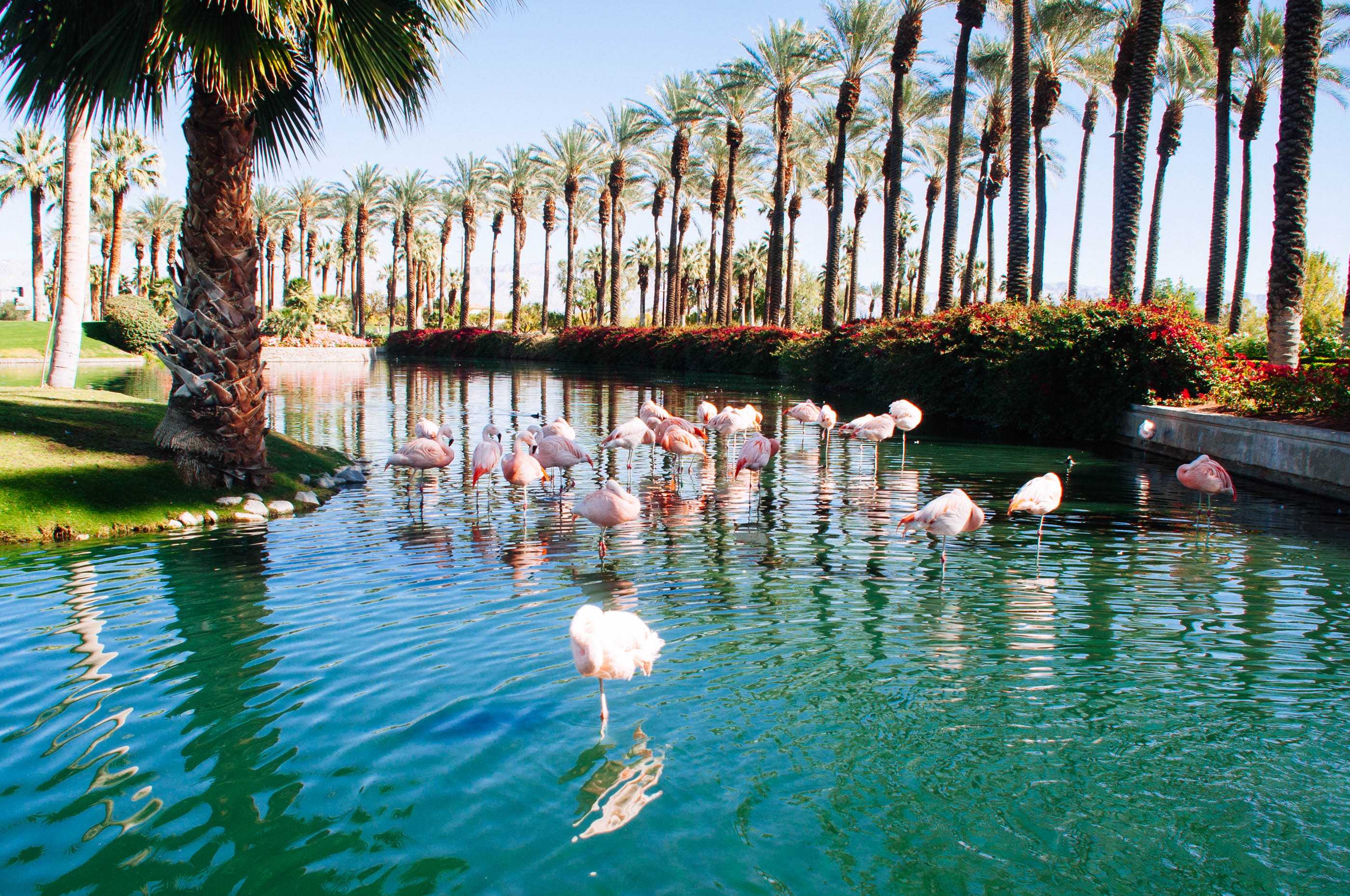flamingo style palm springs