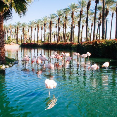 flamingo style palm springs