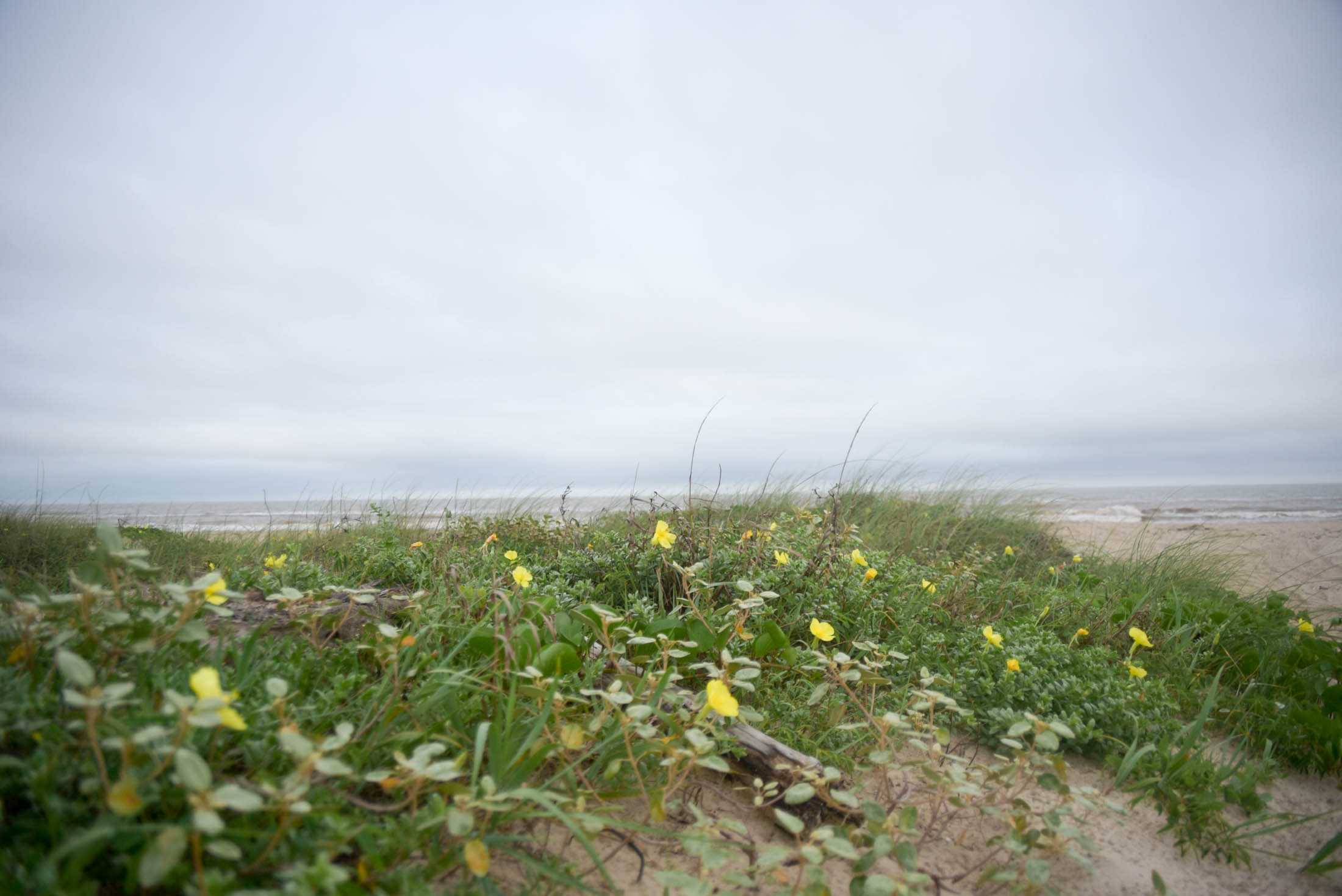 matagorda-surfing-may-21