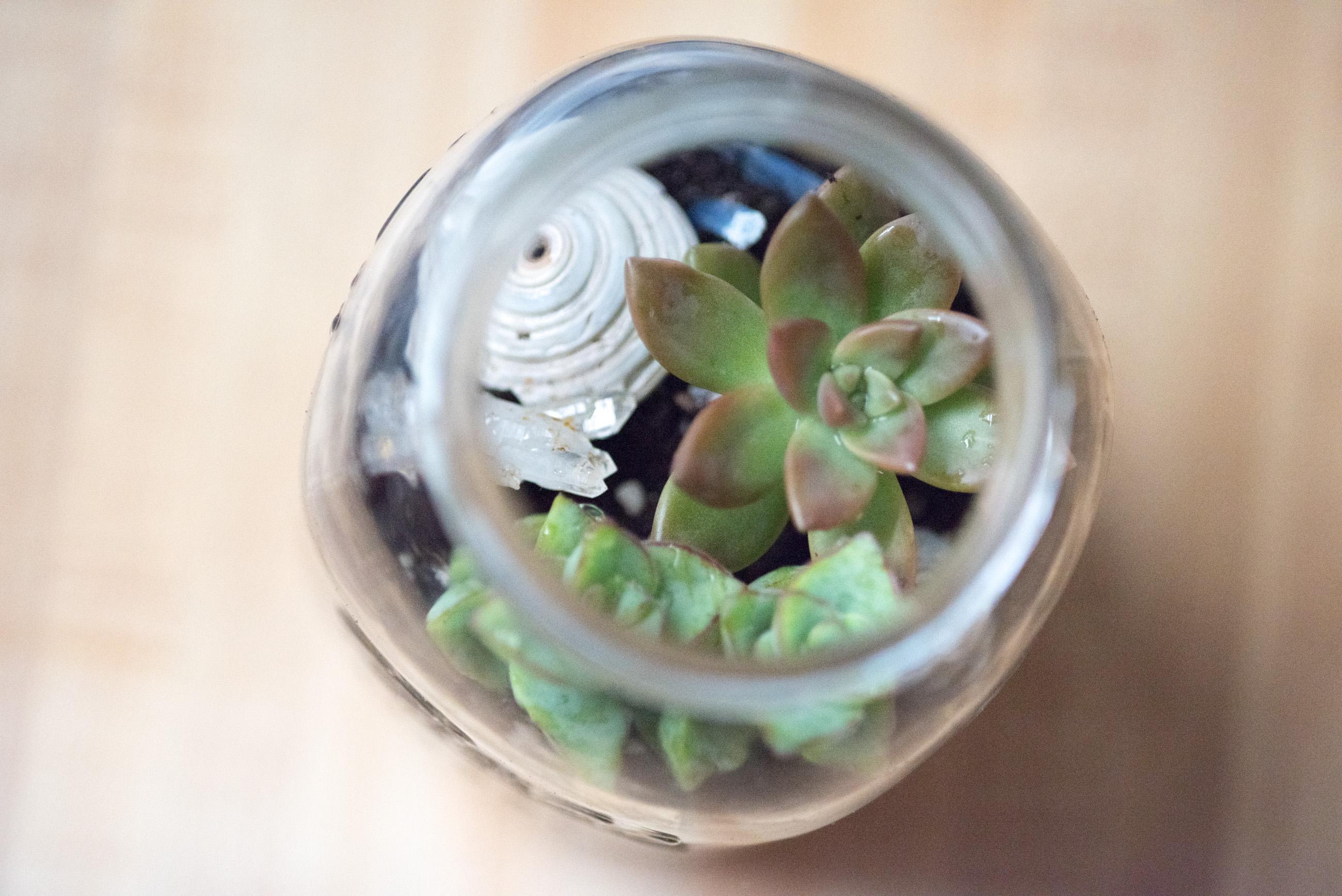 succulent terrarium making