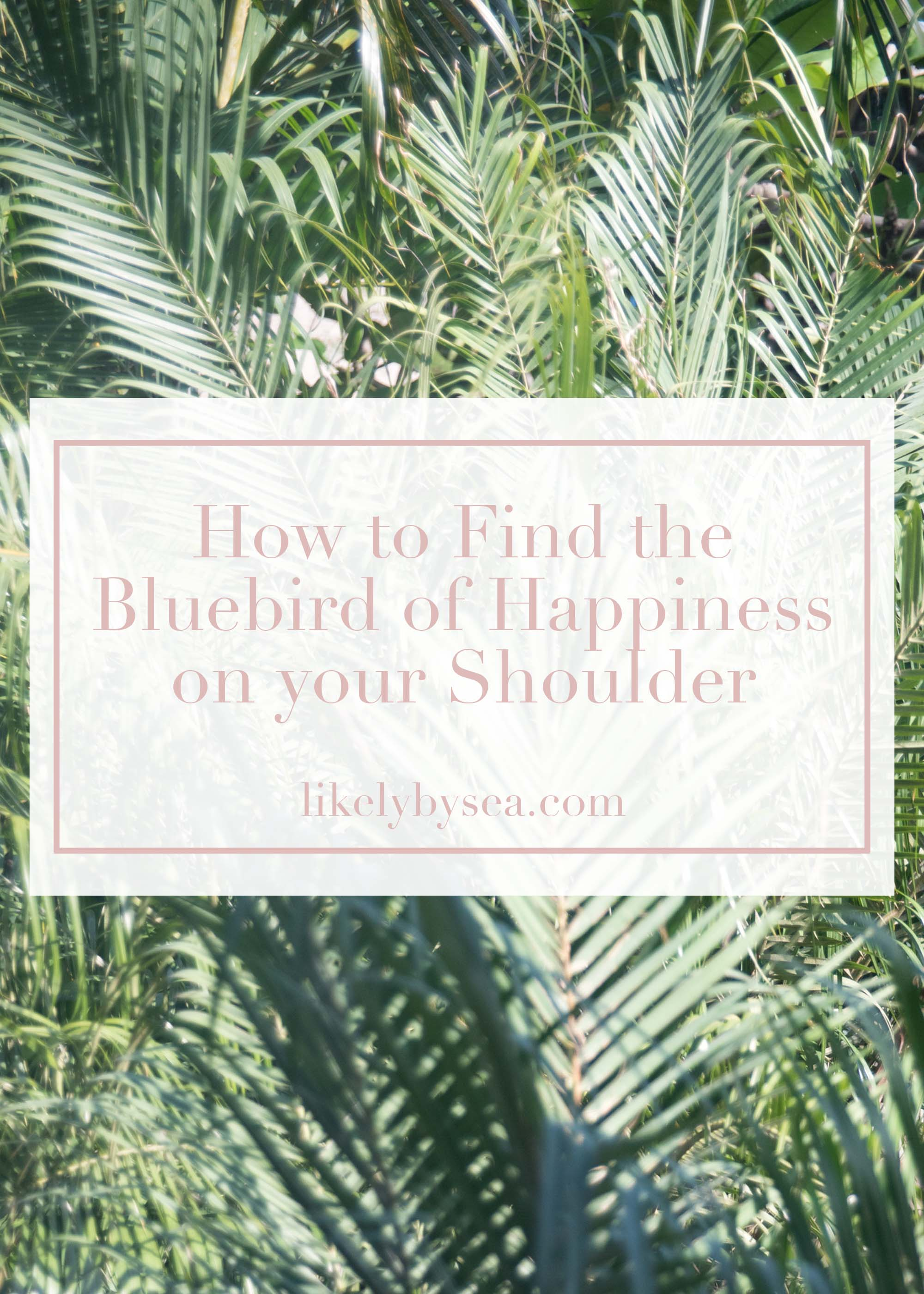 bluebird happiness joy