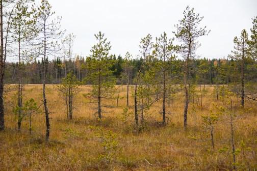 HÄMMÄAUTEENSUO3