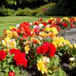 Colourful Flower Beds in the Oamaru Public Gardens (Gardens and Flora Gallery)