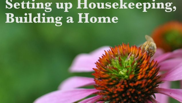 Ask Auntie Leila: Setting up Housekeeping, Building a Home