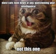 cat-meme_004