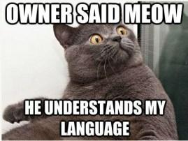 cat_meme
