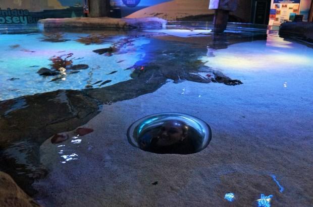 Legal a experiência de estar dentro do aquário.