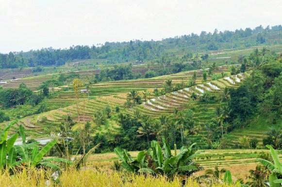 Coisas para fazer em Ubud - terraço de arroz