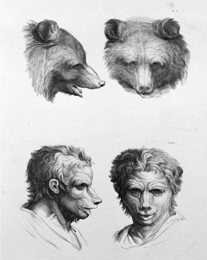 Bear art resembling a human face