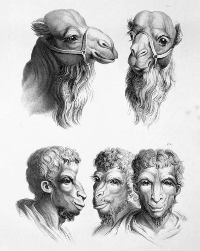 Camel art resembling a human face