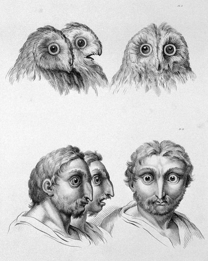 Owl art resembling a human face