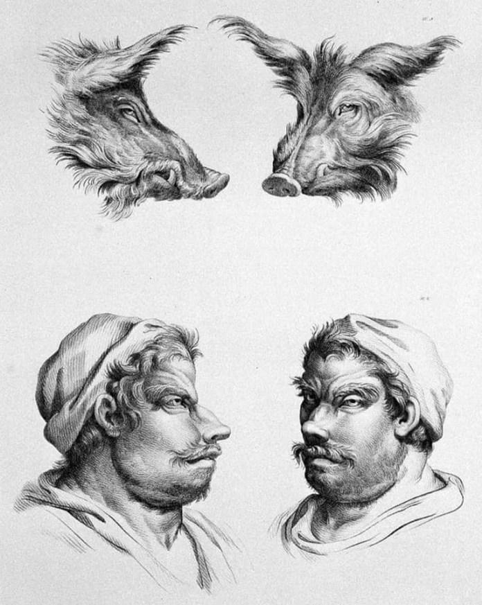 Wild Boar art resembling a human face