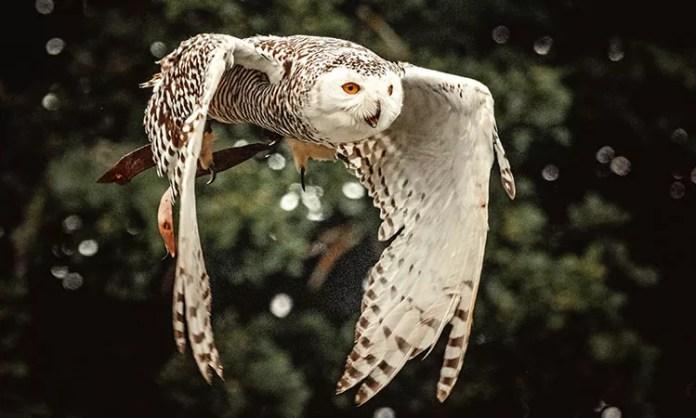 Owls bad luck