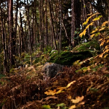 In The Woods - Viikinranta