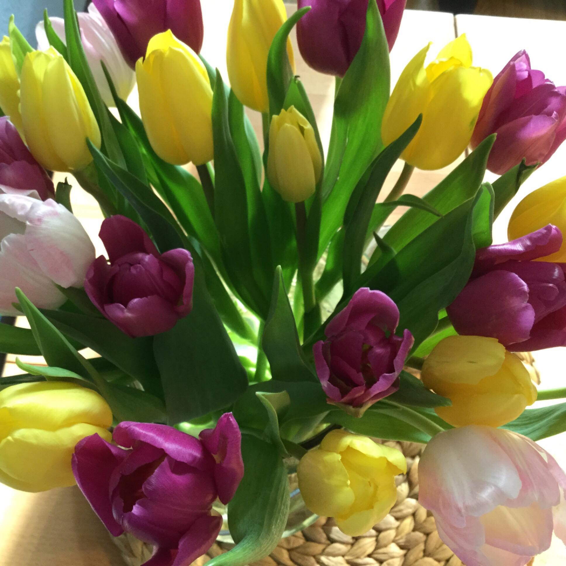 Friday-Flowerday – oder – Jetzt wird's bunt
