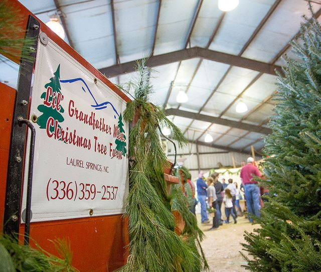 Lil Grandfather Mountain Christmas Tree Farms Free Horse Rides Hay Rides Hay Bale Movie Theater Heated Restroom Santa Claus And Santas Workshop