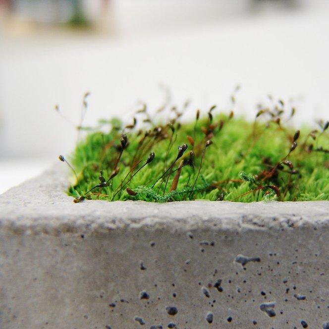 bereangere-haegy-mini-brick-beton-végétal-designmoiquitues-lilideambule