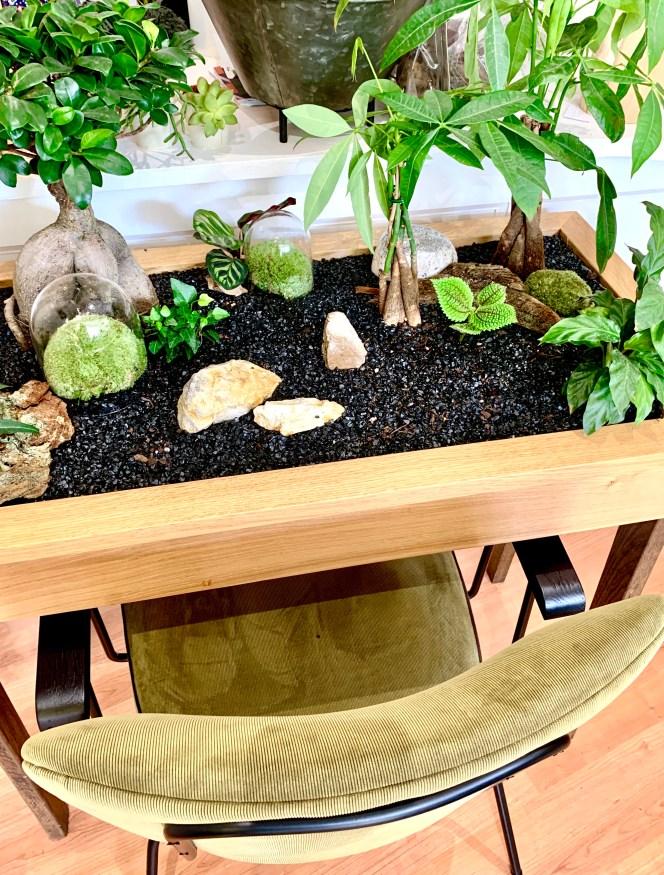 Ilho garden création végétale kokenendo