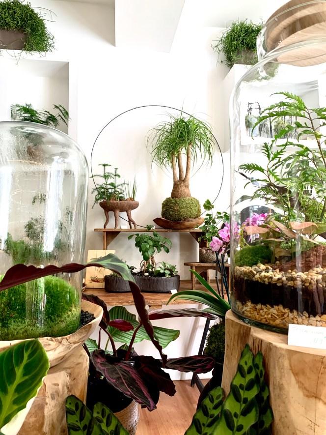 Creations vegétales Kokenendo