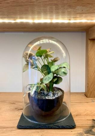 Création végétale sous verre kokenendo