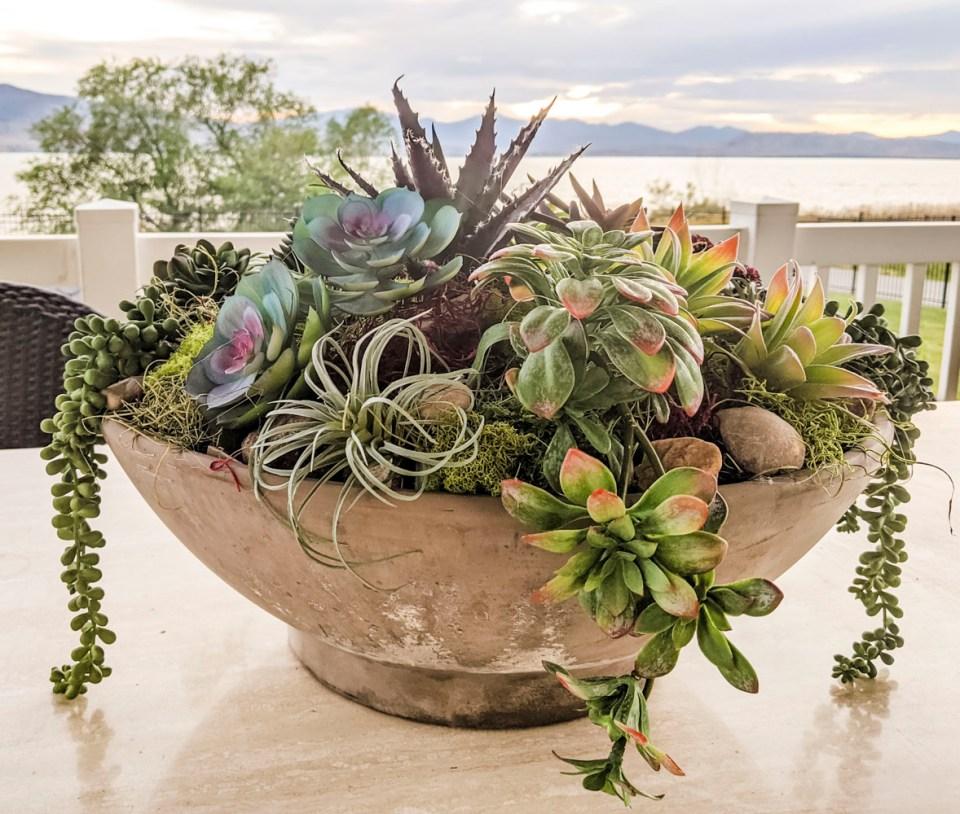 Final Succulent Arrangement