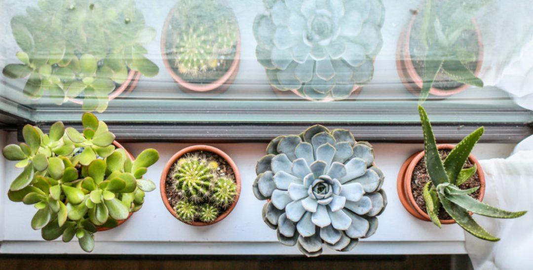 Meet Our Plants