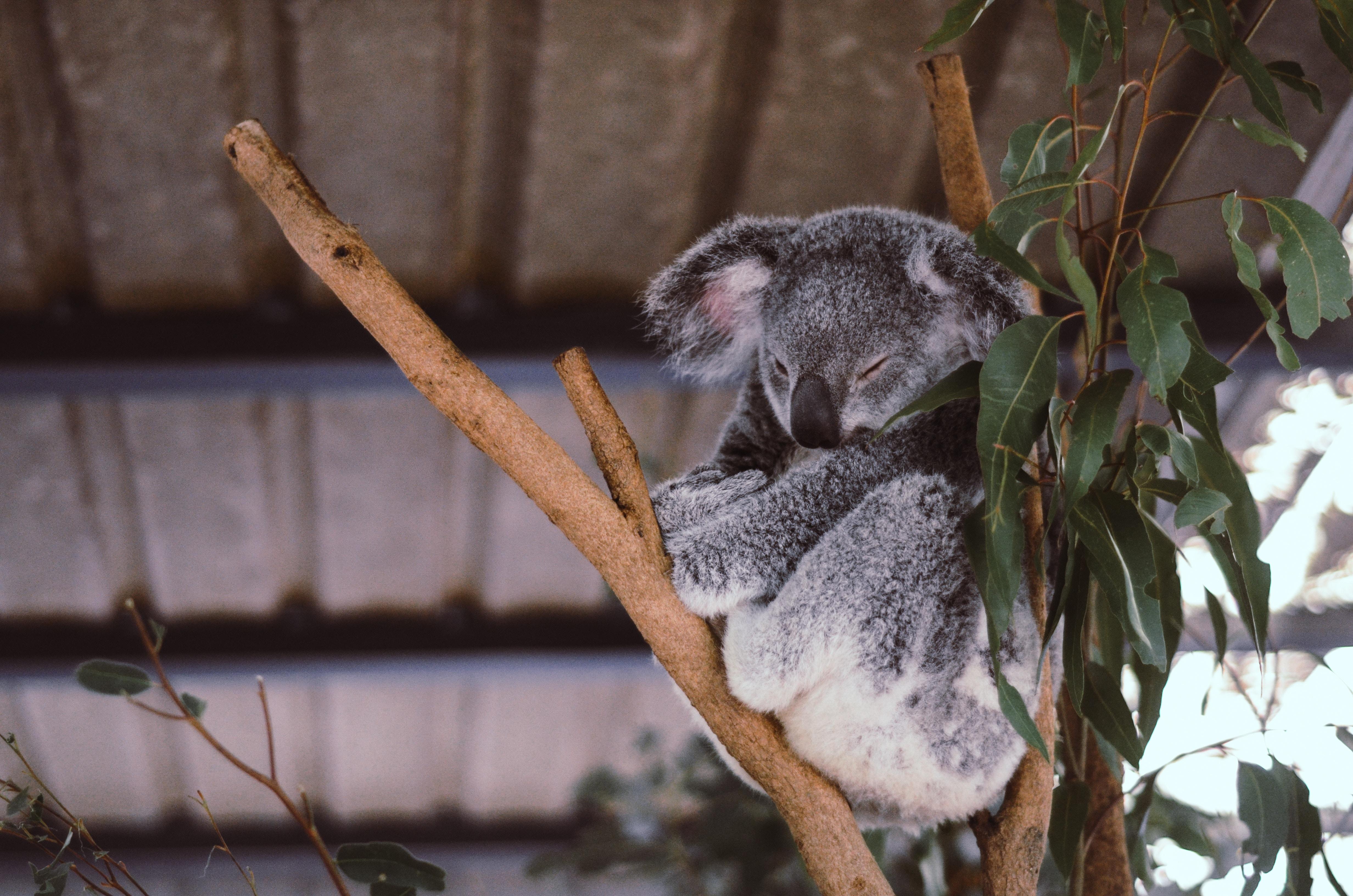 Vous partez en Australie, les romans à emporter dans votre valise