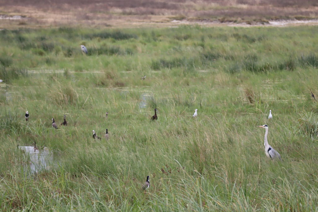 oiseaux ngorongoro tanzanie safari