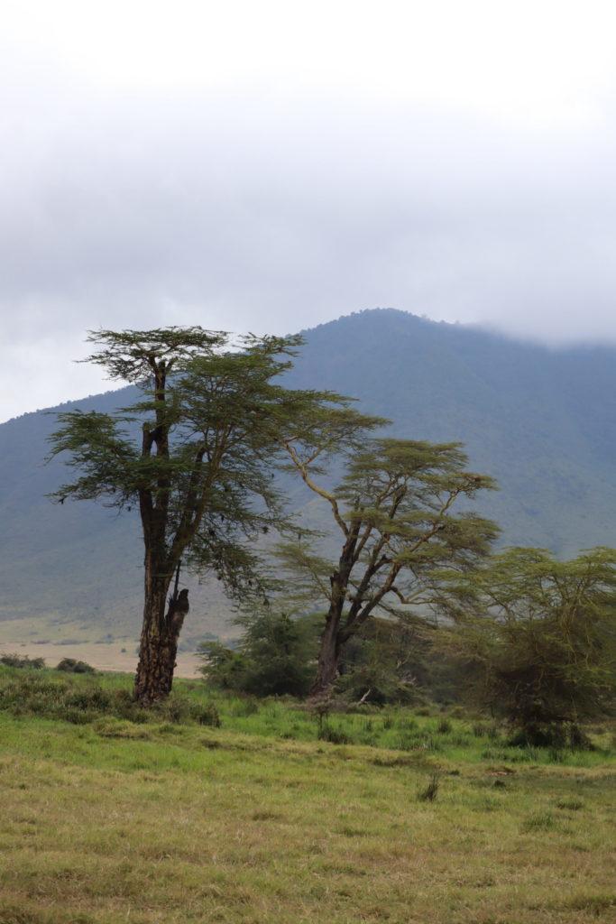 paysage du ngorongoro tanzanie