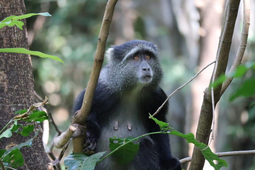singe lac manyara tanzanie safari