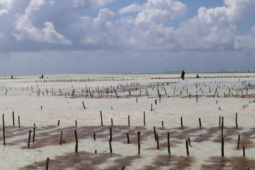 femmes ferme algue zanzibar